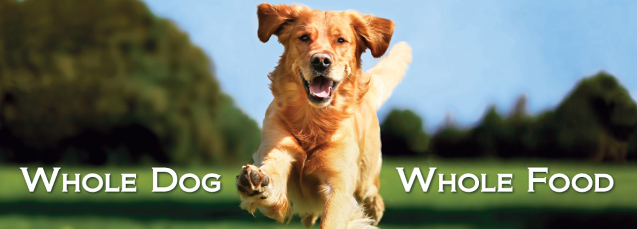 Whole Food Diet for Dogs – BioStarUS